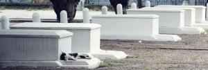 Coffins-Optimized