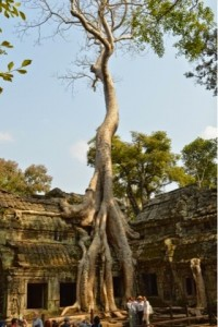 Cambodia, Ta Prohm Temple