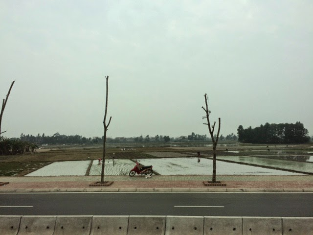 Rice paddies next to the new freeway from the airport to downtown Hanoi