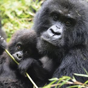 Rwanda Trip Overview